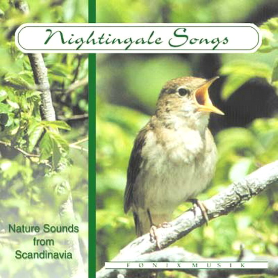 Nightingale/Yanni